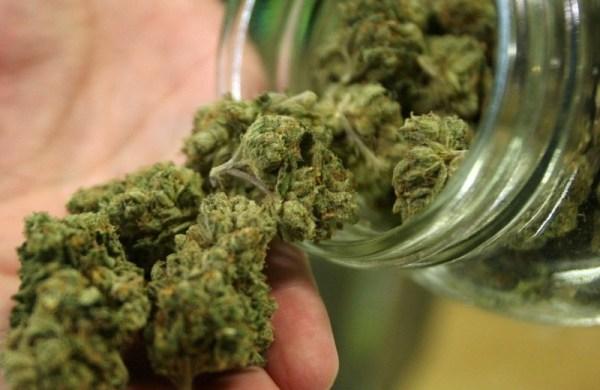 Vendita Cannabis Legale - Continua la Popolarità della Marijuana Light.